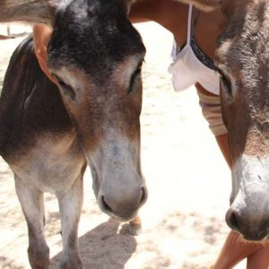 tour senderismo en burro